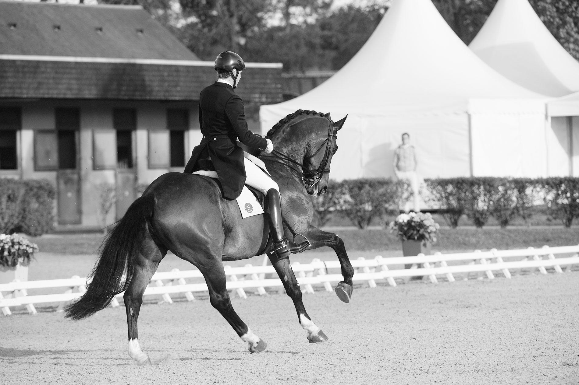 Ruoste Dressage Henri Dressage Horse