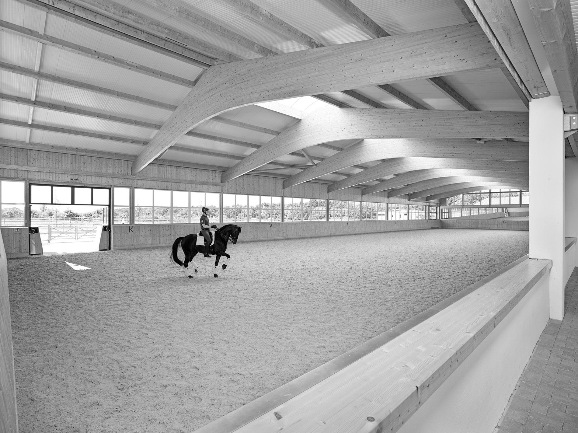 Ruoste-Dressage-Henri-Horse-Reithalle